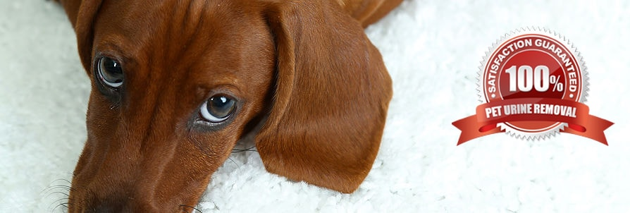 Pet Odor Removal Company In Germantown Safe Dry 174